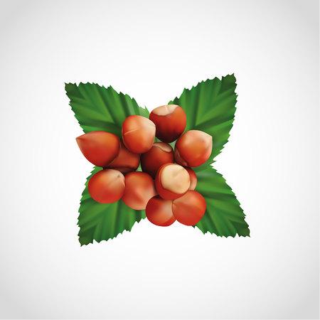 Realistic pile of hazelnut and nuts leaf, vector, illustration, eps file