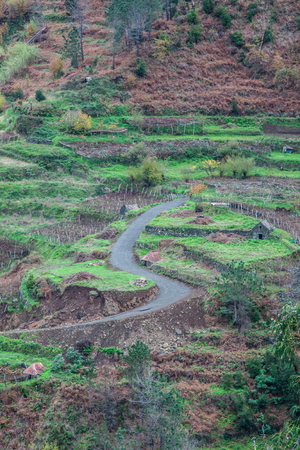 Cultivated terraced fields on the cliff top on the island of Madeira photo