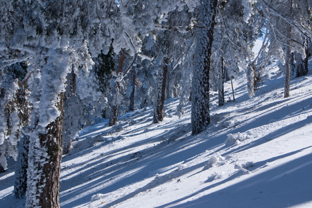 Winter in the mountain navacerrada madrid,spain, photo