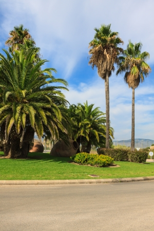 palm garden: Palm Garden in front of house Stock Photo