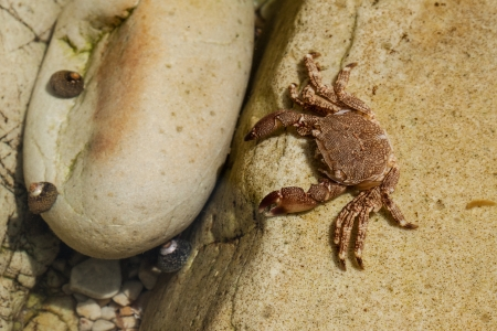 dissimulation: ghost crab on sand