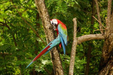 Parrot in the Park ,island of Mucura,Colombia photo