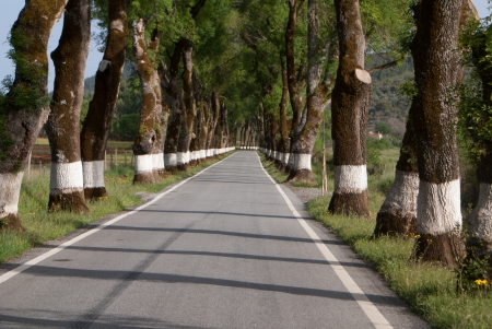 Road of green trees during spring time in the Portugal photo