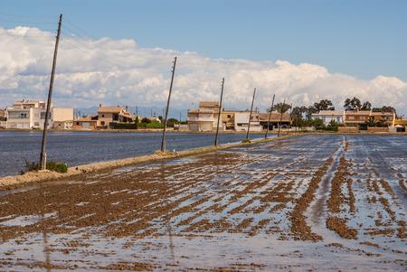 view of a paddy field in Delta de l photo