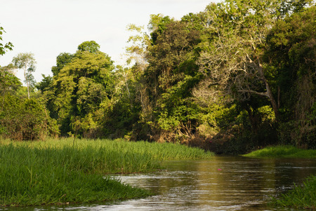 amazonas: A river and beautiful trees in a rainforest Peru Stock Photo