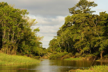 A river and beautiful trees in a rainforest Peru photo