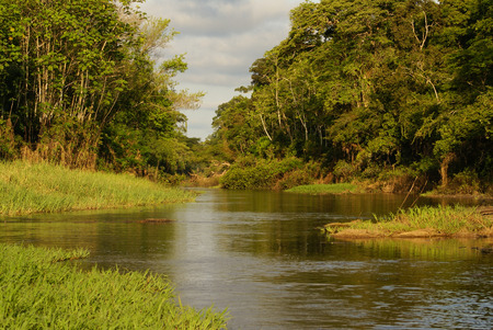 the biosphere: A river and beautiful trees in a rainforest Peru Stock Photo