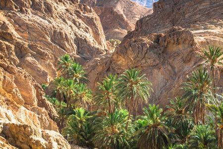 onion valley: Mountain oasis Chebika at border of Sahara, Tunisia, Africa