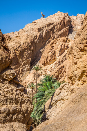 mountain oasis: Mountain oasis Tamerza in Tunisia near the border with Algeria. Stock Photo