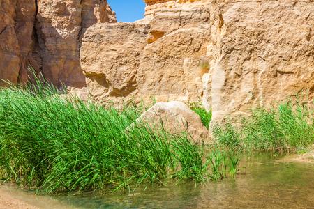 mountain oasis: Famous Mountain oasis Chebika in Tunisia, Northern Africa