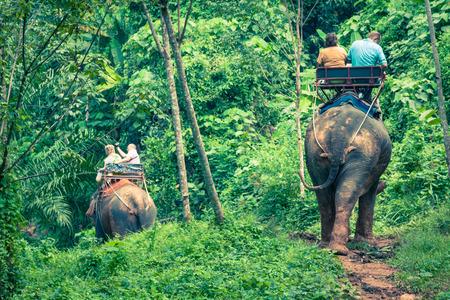 mai: Elephant Trekking Through Jungle in Northern Thailand
