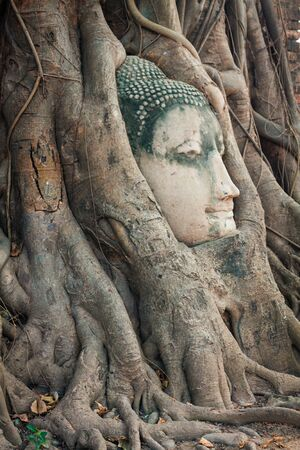Head of Buddha statue in the tree roots at Wat Mahathat, Ayutthaya, Thailand. photo