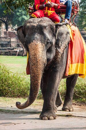 Tourists on an elefant ride around the Park in Ayutthaya,Thailand. photo