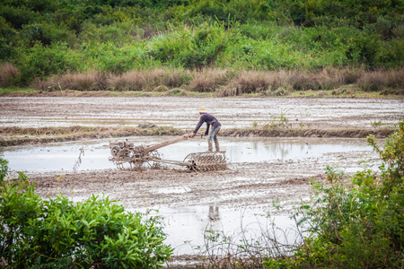 Cambodian farmer in a rice field photo