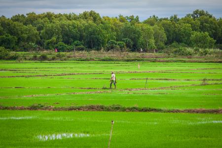 Cambodian rice fields photo