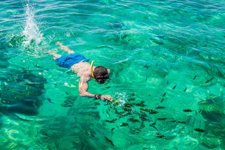corales marinos: Snorkel Hombre en la isla Phi Phi, Phuket, Tailandia Foto de archivo