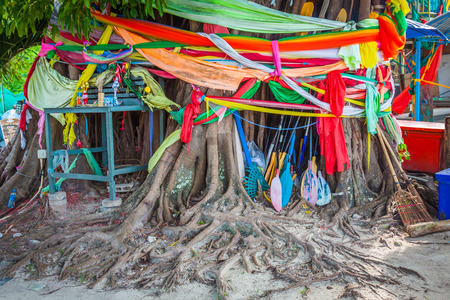 ordination: Conservation tree by tree ordination,Phi-Phi islands,Thailand Stock Photo