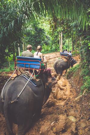 jungla: Senderismo del elefante por la selva en el norte de Tailandia Foto de archivo