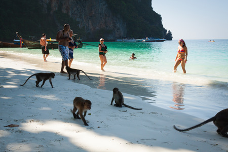 Phi-Phi islandsi,Thailand,December 09,2013:Monkey at the Monkey beach in Koh phi phi island,Thailand 新聞圖片