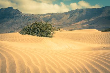 lanzarote: Sand dunes on Famara beach, Lanzarote