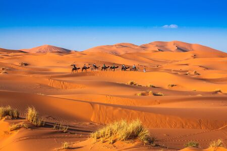 Camel caravan going through the sand dunes in the Sahara Desert, Merzouga, Morocco Stock Photo