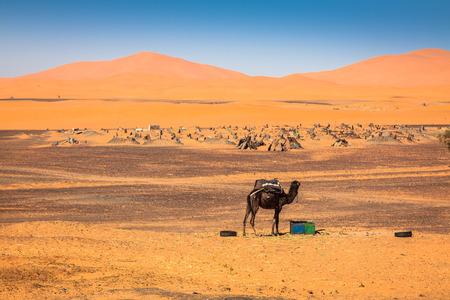 erg chebbi: Sand Dunes of Erg Chebbi int he Sahara Desert, Morocco Stock Photo