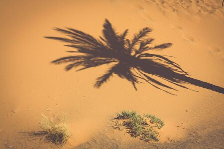 erg: Palm tree in Erg Chebbi, at the western edge of the Sahara Desert Stock Photo