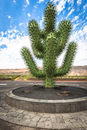 manrique: tropical cactus garden in Guatiza village, Lanzarote, Canary Islands, Spain