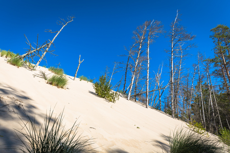 The moving dunes in the Slowinski National Park, Poland. The dunes are regarded as a curiosity of nature on a European scale.