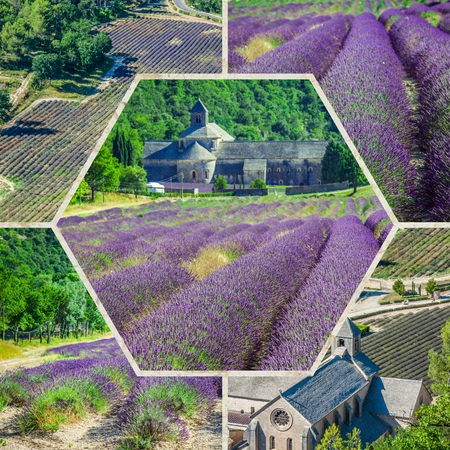 lavendin: Collage of lavender field in the Gordes, France