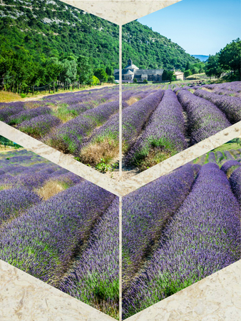 senanque: Collage of lavender field in Provence,France Stock Photo
