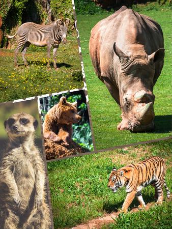 Collage wild african animals. Stock Photo