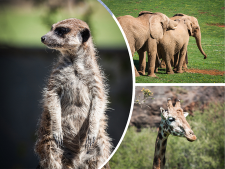 Collage wild african animals. Stock Photo