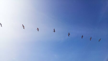 A line of seagulls flying through the blue sky of the beaches of Mancora located northwest of Peru Stok Fotoğraf