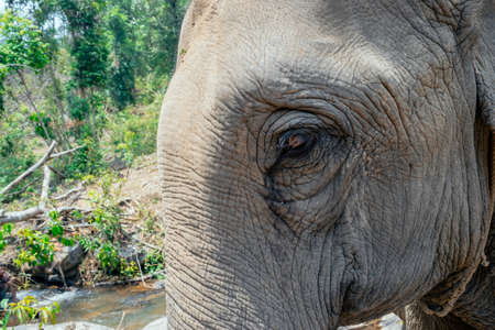 A close up abstract image of an elephants face