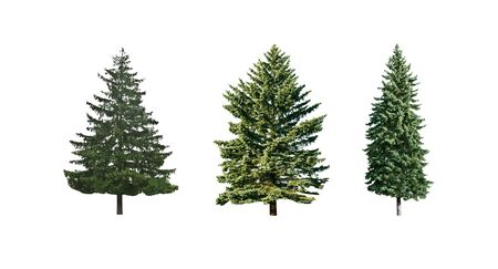 three pine trees is isolated on a white background