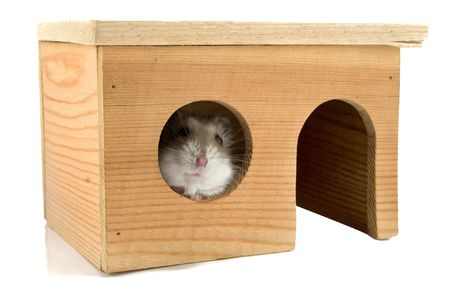 a hamster is in a house
