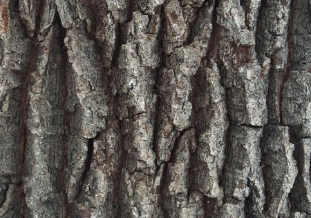 close-up of an oak trees bark  Stock Photo