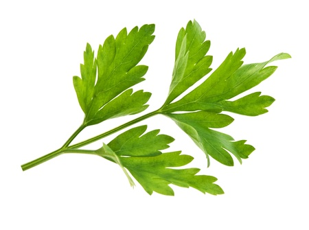 sprig of parsley is isolated on white background Stock Photo