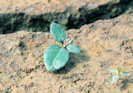 green plant growing from cracked earth photo