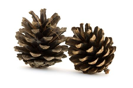 two pine cones isolated on white photo