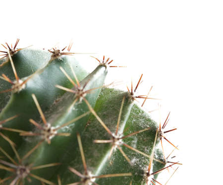healing plant: Close up of the healing plant cactus