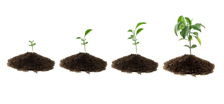 four plants lemon green and soil
