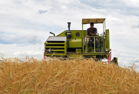 combine harvesting a wheat field  Stock Photo - 14680293