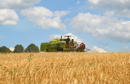 green combine harvesting wheat  Stock Photo - 14664367