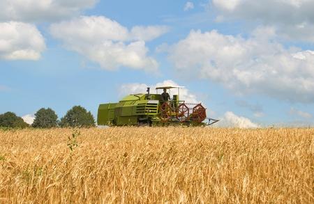 green combine harvesting wheat  photo