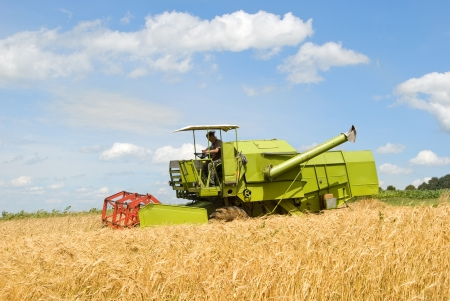agricultural equipment: green working harvesting combine in the field of wheat