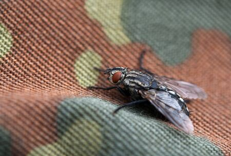 fly on background camouflage photo