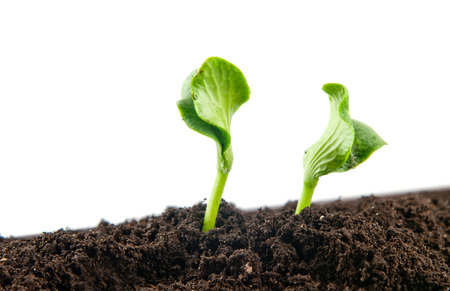 plants growing seedling in soil isolated on white background