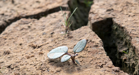 parch: Plants grow up from dried desert mud